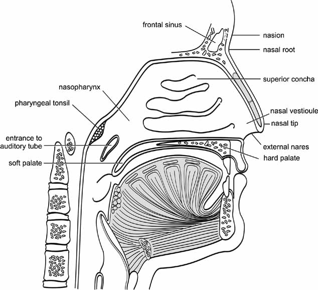 Elements of Morphology: Human Malformation Terminology