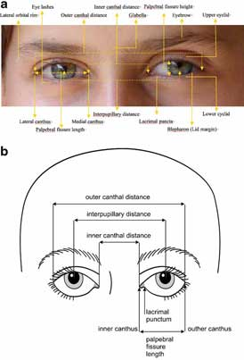 human brow diagram schema diagram preview Lip Diagram